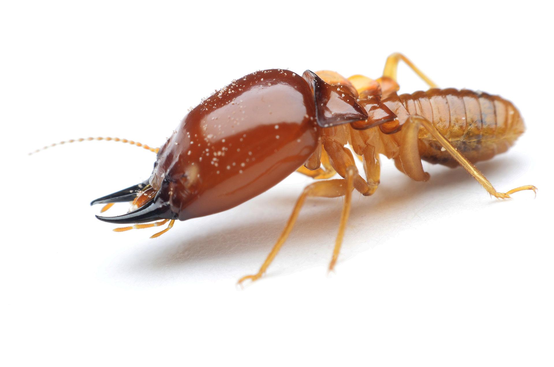 Home Australian Termite Solutions